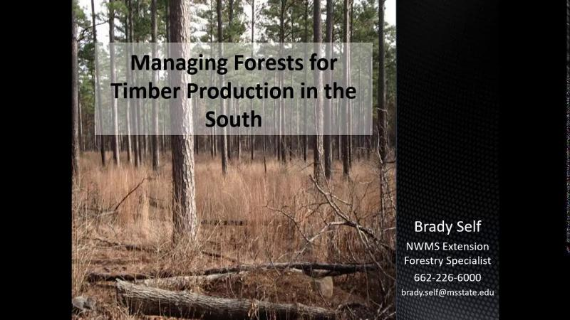 Managing Forests for Timber Production in the South
