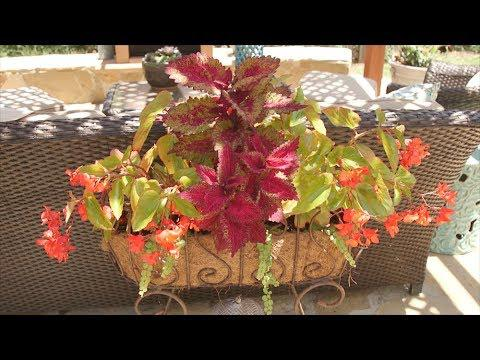 Fall Flower and Garden Fest | Mississippi State University Extension on