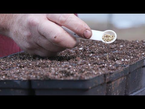 Seedling Transplants