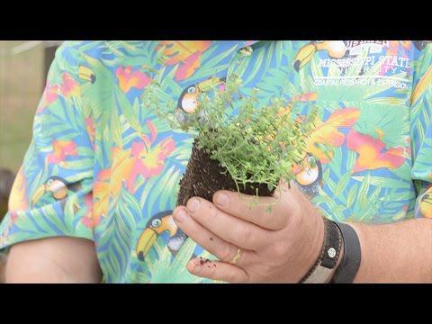 Herb Box