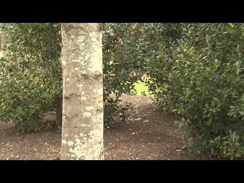 Southern Gardening TV - March 13, 2013 - Lichen