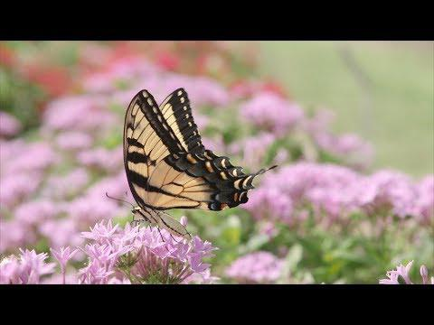Butterfly Gardening from Scratch
