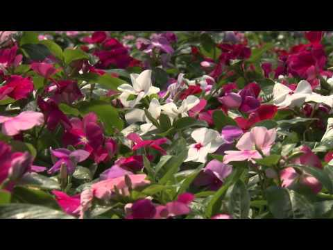 All America Selection - Southern Gardening TV - September 25, 2013