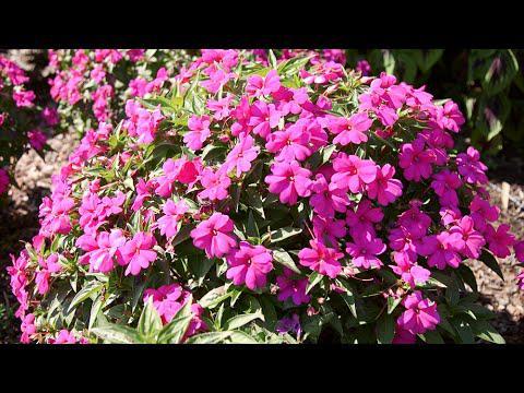 Combination Plantings
