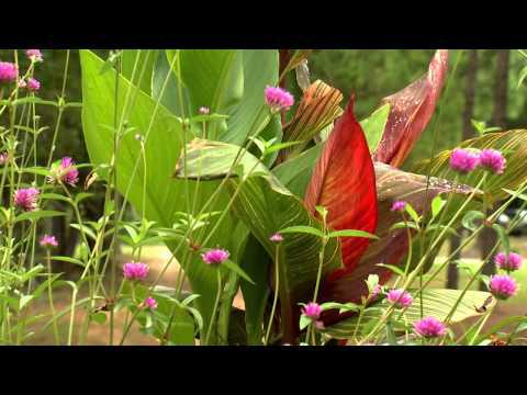 Jerry's Jungle Stump - Southern Gardening TV - August 21, 2013