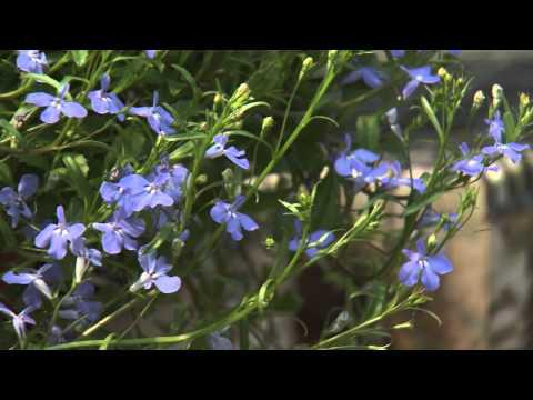 Southern Gardening TV - April 24, 2013 - Singing the Blues