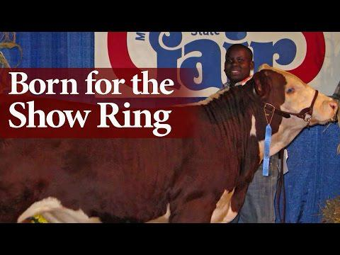 Born For The Show Ring Feature