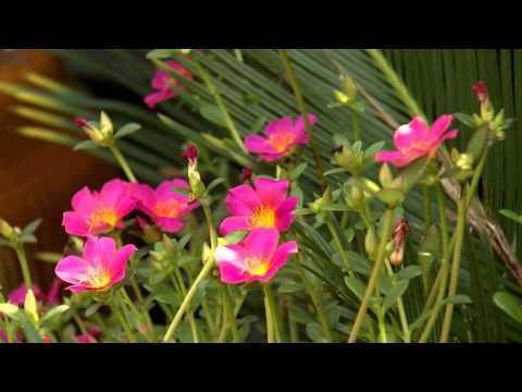 Color Pockets - Southern Gardening TV - August 14, 2013