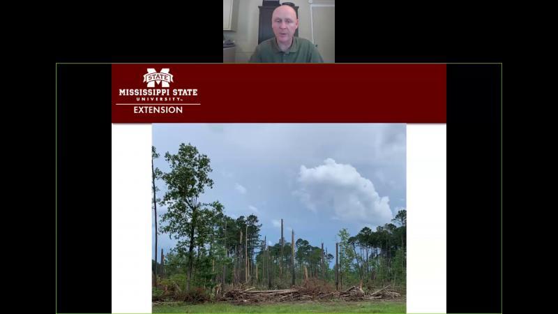 Salvaging Storm Damaged Timber April 17, 2020