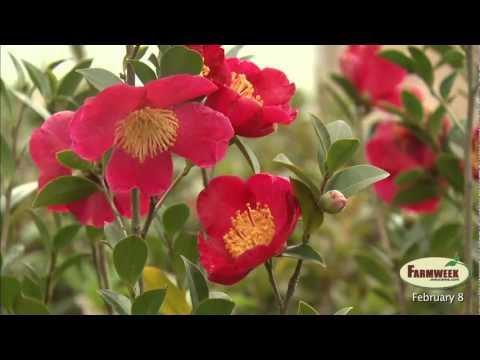 Farmweek - Entire Show- February 8, 2013