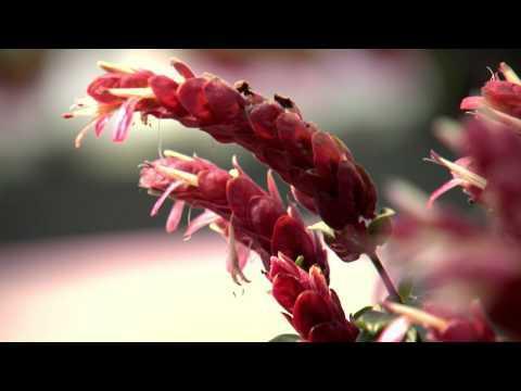 Southern Gardening TV - Flowering Standards, May 1, 2013