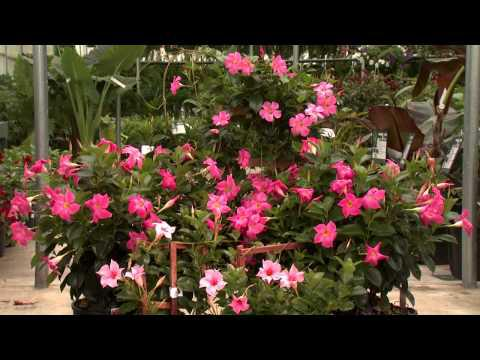 Southern Gardening TV - Tropical Summer Color, May 8, 2013