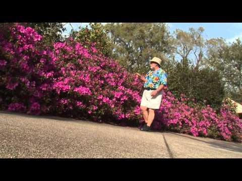 Southern Gardening TV - April 3, 2013 - Indica Azalea