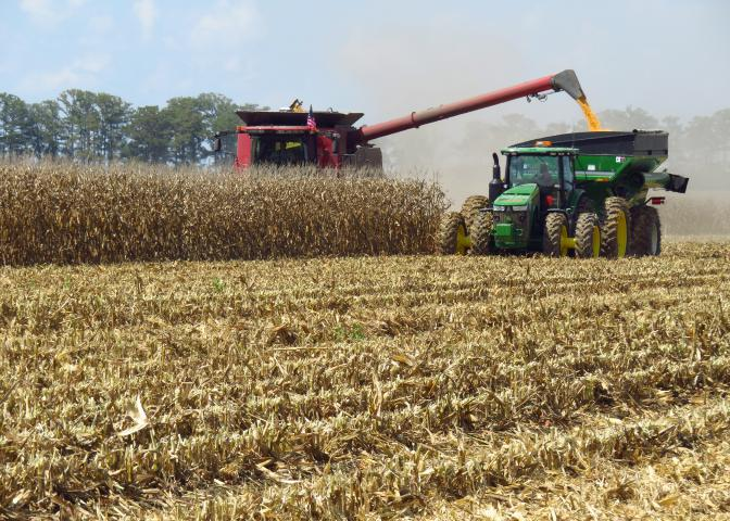 Despite rain delays, corn harvest is in full swing across Mississippi on fields such as this one on a Leflore County farm in Morgan City on Aug. 24, 2016. (Photo by MSU Extension Service/Erick Larson)