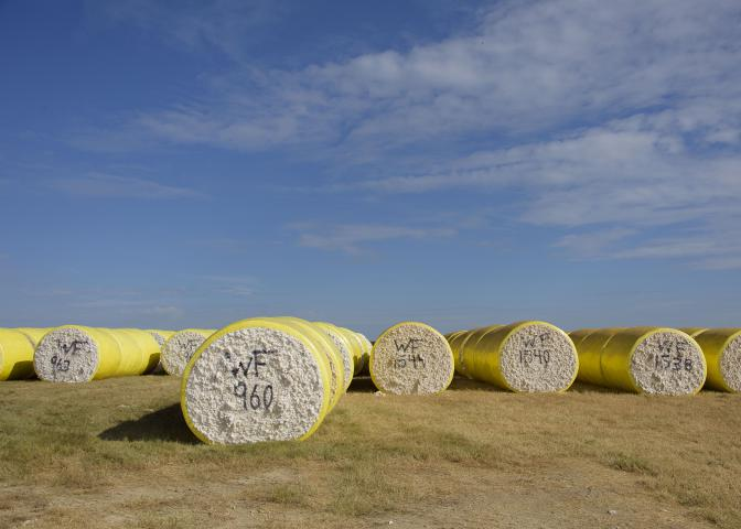cotton bale tubes in field