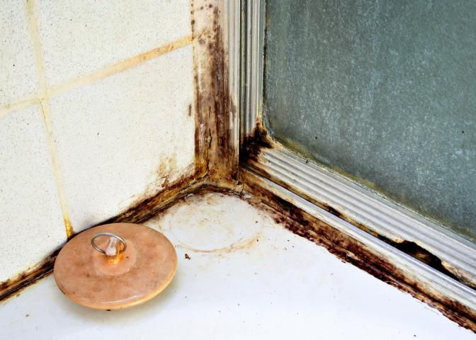 Mildew and mold growth can take place in damp areas of the home, including showers, sinks, bathrooms and kitchens. Clean damp areas, such as kitchens, bathtubs or under-sink cabinets, frequently to reduce mold-feeding spores and microbes. (Photo by Canstock)