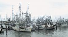 Shrimp boats  dock following a night's fishing.