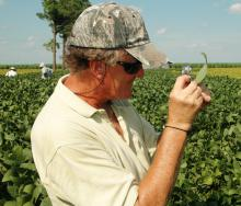 Union County soybean producer Mike Pannell checks a leaf for Asian soybean rust on a farm near Alexandria, La.