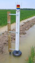 "A newly designed flood gauge by Mississippi State University helps rice producers conserve water by allowing them to monitor flood depth from a distance. Red indicates ""add water,"" yellow means ""prepare to add water,"" blue signifies ""full flood"" and green means ""losing money from over-pumping."" (Photo by Joe Massey/MSU Department of Plant and Soil Sciences)"