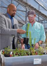 Mississippi State University weed science associate professor Alfred Rankins, left, and his student, Wes McPherson of Inverness, go outside the classroom to look for pest problems in greenhouse plants. (Photo by Jim Lytle)