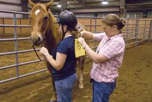 Mississippi State University equestrian team member Megan Dorris, left, steadies her mount while coach Molly Nicodemus pins on her number before an equitation demonstration. (Photo by Marco Nicovich)
