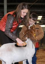 Forrest County 4-H members Alexandra Pittman, 12, and Carson Keene, 5, of Hattiesburg, prepare to take Pittman's Mississippi bred grand champion goat, which was the reserve champion light heavyweight goat, into the auction ring at the Dixie National Sale of Junior Champions on Feb. 11. Buyers donated more than a quarter of a million dollars at this year's sale of 42 market animals. (Photo by Kat Lawrence)