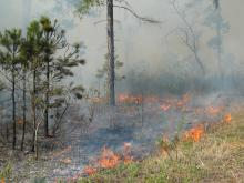 Ten Southern states have passed laws to define prescribed fire burning as a legal activity with ecological and social benefits that does not constitute a public or private nuisance. (Photo by MSU Department of Wildlife, Fisheries and Aquaculture/Wes Burger)