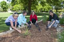 Lowndes County Master Gardeners, from left, Jean Wilson, Mary Faglie, Jennifer Duzan and Nell Thomas examine some of the herbs growing in the garden they renovated for the Culinary Institute at Mississippi University for Women. (Photo by Scott Corey)