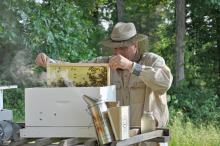 New beekeeper Mark Lewis of Lowndes County enjoys learning about bees and their care. (Courtesy photo by Keri Collins Lewis)