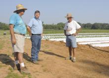 James Earnest, left, and his business partner, Doil Moore, right, visit with Chickasaw County Extension Agent Scott Cagle at the gardens on Prospect Produce Farm in the Sonora Community south of Houston. (Photos by Linda M. Breazeale)