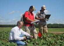Gary Lawrence and undergraduate students Ben Berch and Patrick Garrard (from left) collect hyperspectral reflectance data from cotton plants infected with reniform nematodes for a grant-funded project at Mississippi State University.