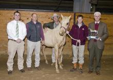Veterinarians in the Mississippi State University College of Veterinary Medicine's theriogenology (reproduction) group stand with one of the MSU weanlings, the grandson of Dash for Cash, a champion American Quarter Horse. Pictured before the recent MSU horse sale are Drs. Heath King, David Christiansen, Richard Hopper, Kevin Walters and Peter Ryan. The AQHA recently recognized MSU for its efforts to maintain the quality of the breed. (Photo by MSU College of Veterinary Medicine/Tom Thompson)