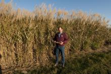 Mississippi State University research scientist Brian Baldwin developed Freedom giant miscanthus, a biofuel feedstock used to create tank-ready gasoline. (Photo by MSU Ag Communications/Scott Corey)