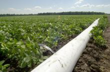 Mississippi State University scientists are evaluating a free software tool that can increase irrigation efficiency for the state's soybean producers. PHAUCET, or Pipe Hole and Universal Crown Evaluation Tool, has the potential to reduce water pumped from the Delta's underground water supply. (MSU Ag Communications/File Photo)