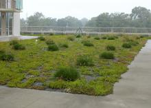 Today, the gardens are thriving and providing data to help scientists better understand the effects of the coastal environment on green roofs. (MSU Ag Communications/Submitted photo)