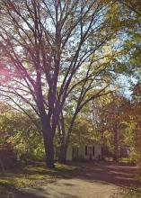 Correctly placed trees can provide beauty and shade to houses, add value and reduce the amount of money spent each year on air conditioning. (Photo by MSU Landscape Architecture/Bob Brzuszek)