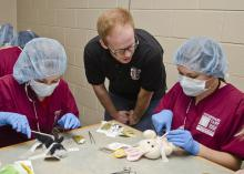 Third-year Mississippi State University College of Veterinary Medicine student Andrew Nelson (center), supervises as Vet Camp attendees practice suturing techniques on plush toy animals. (Photo by MSU College of Veterinary Medicine/Tom Thompson)