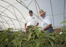 Mississippi State University Extension Service agent Jim McAdory and Choctaw Fresh Produce general manager Dick Hoy check plants at the high tunnels near Conehatta Elementary. (Photo by MSU Ag Communications/Kat Lawrence)