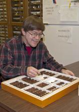 Mississippi State University researcher Terence Shiefer examines a specimen that is part of a large collection of long-horned beetles recently donated to the Mississippi Entomological Museum, in this photo taken in Starkville, Miss., Oct. 18, 2013. (Photo by MSU Ag Communications/Kat Lawrence)