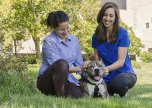 From left, Dr. Maria Perez Hernandez, a veterinary resident at the Mississippi State University College of Veterinary Medicine, and Lauren Dabney, a third-year doctor of veterinary medicine student, spent months helping Dirty learn to walk again. (Photo by MSU College of Veterinary Medicine/Tom Thompson)