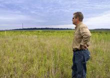 Guy Ray, president of Pleasant Lake Plantation, looks over grasslands on the property on July 31, 2014. He has implemented numerous conservation land management practices to make the Leflore County, Mississippi, plantation a model of sustainability and functionality. (Photo by MSU Ag Communications/Kevin Hudson)