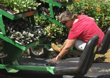 Brittany Reyer sets plants for the fall crop at Reyer Farms in Lena while her husband drives the tractor. (Photo by MSU Ag Communications/Kevin Hudson)