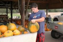 John Stockton wipes down a pumpkin freshly harvested				on the Mayhew Tomato Farm in Lowndes County. (Photo by Linda Breazeale)