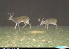 Photos taken using game cameras provide valuable information on deer population statistics, feeding patterns and more. (Photo courtesy of MSU Department of Wildlife, Fisheries & Aquaculture.)