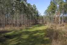 With a new sawmill in central Mississippi and the prospect of more being built, timber plots like this one at Coontail Farm in Aberdeen will be a good investment long-term despite middling timber market conditions now. (File photo by MSU Extension Service/Kevin Hudson)
