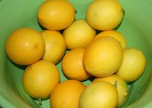 Meyer lemons, a cross between a lemon and an orange, are thin-skinned and sweet. They can be grown in Mississippi landscapes. (Photo by MSU Extension/Gary Bachman)