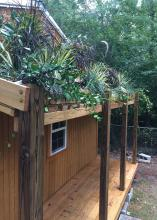 A variety of plants grow on the roof over the small porch of a wood-sided building.