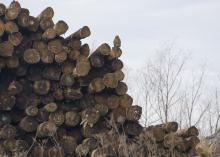 The cut ends show in a pile of logs stacked tall against a pale, winter sky.
