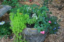 A green sedum spills over the edge of a container displaying other greenery and blooms.