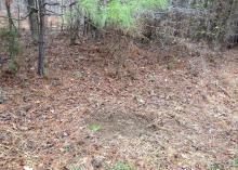 Dry leaves and pine straw are cleared away in a round, bare area on the ground below small pine branches.